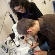 Un prototipo di simulatore che replica la struttura del grafene apre la strada a una nuova classe di nano-dispositivi per studiare il mondo quantistico. Frutto di una collaborazione tra laboratorio Nest e Columbia University, è pubblicato sulla rivista Science.