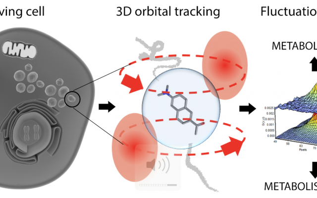 The team coordinated by Prof. Francesco Cardarelli at SNS was able, for the first time, to bring state-of-the-art imaging and analytical tools on the trajectory of a moving, nanoscopic subcellular system. Results are published in ACS Nano.